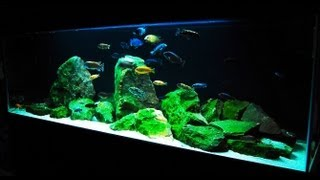How to Set up an African Cichlid Tank - Step by Step Guide