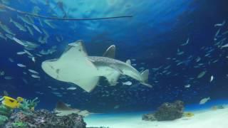 癒しのアクアリウム 1時間 水中音・音楽有 Healing aquarium 1hour