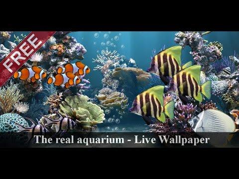 Video of The real aquarium - LWP