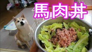 柴犬小春 ていうか、生キャベツも食べるし【ASMR】激うま馬肉丼!音フェチ・飯テロKoharu Meal Time: Horse Meat And Cabbage!