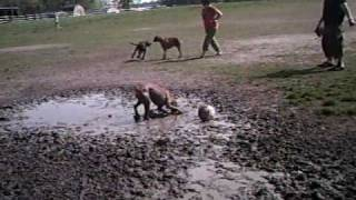 Boxer Doggies + Mud = Very Happy Boxer Doggies!