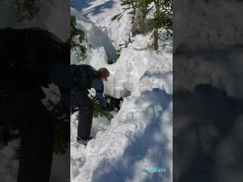 Snowmobilers rescue moose from tree well in Western Newfoundland