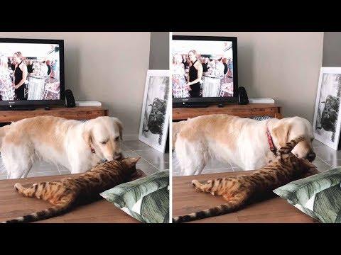 А вы говорите, как кошка с собакой