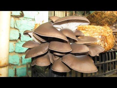 Il fungo su una fotografia nota il corpo come trattare