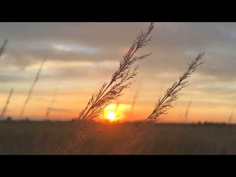 Stalks of grass at sunset. Стебли травы на фоне заката.