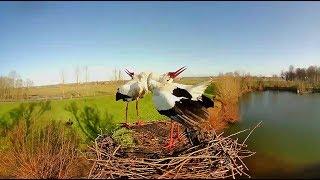 Webcam Live Ooievaars Wamel Gelderland