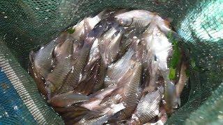 Trúng bầy cá, tìm lại cảm giác sướng tay ở 2 dạo nước tối | Săn bắt SÓC TRĂNG |