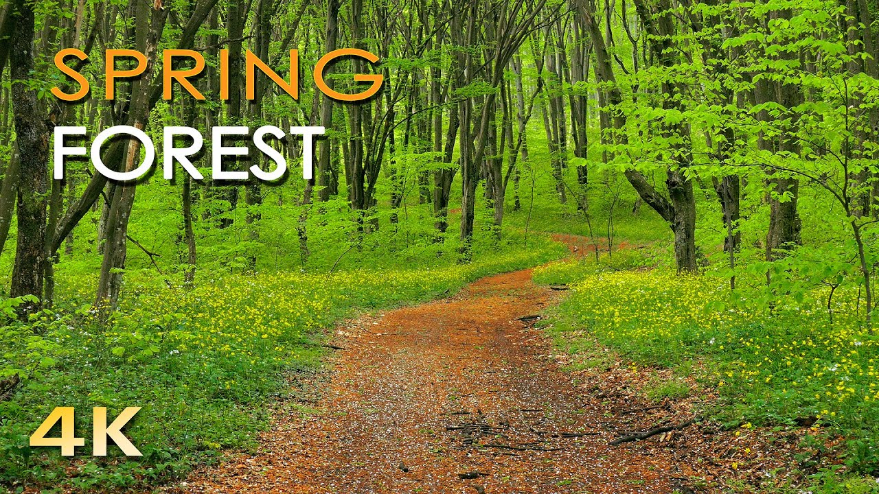 YouTube 4K Spring Forest video thumbnail