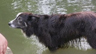 This Dog Was Tangled In Branches On A River For Days  Then Bystanders Embarked On A Daring Rescue