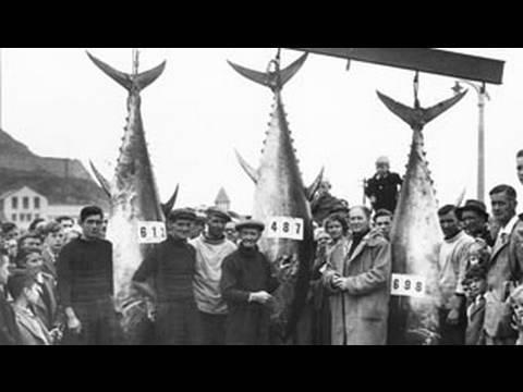 Fieldsports Britain – 1940's film stars and the extraordinary Tunny Club