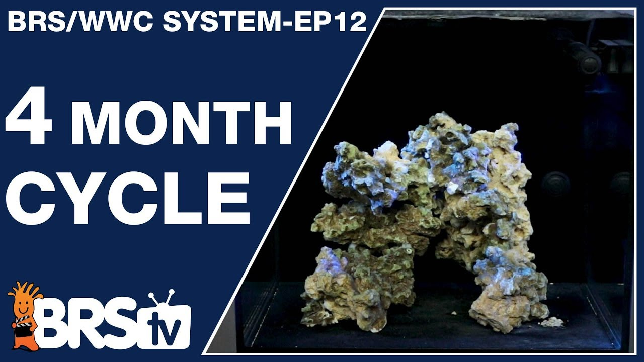 Ep12: The BRS/WWC Hybrid 4-month SPS tank cycle. - The BRS/WWC System