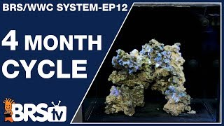The BRS/WWC Hybrid 4-month SPS tank cycle - The BRS/WWC System Ep12 - BRStv