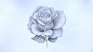 Смотреть онлайн Как рисовать красивую розу простым карандашом
