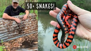 Insane Louisiana Snake Hunting: 50+ Snake Day, Beautiful Mud Snakes and More!