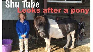 How to look after a pony   Miniature Shetland Pony   Shu Tube cares for a Pony