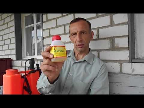 Актофит: инструкция по применению против колорадского жука
