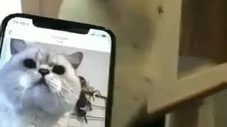 suara kucing betina - TH-Clip