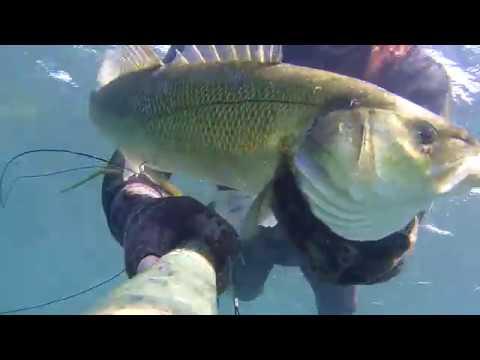 Come scegliere il vetro di campo per pescare in caccia