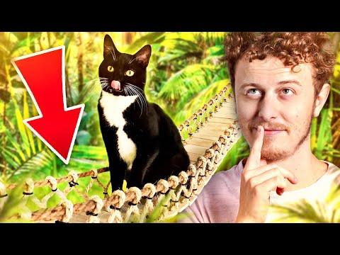 Nejlepší dárek pro kočku - Norman