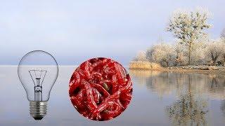 Кормушка приманка для рыбы