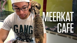 Meerkat Cafe in Seoul, South Korea—Meerkat Friends