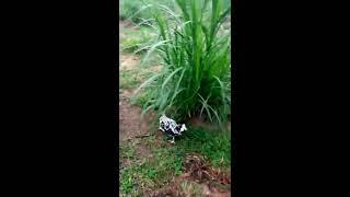 mô hình nuôi thỏ new zealand ngoài tự nhiên hoang dã tự tìm thức ăn và sinh sản