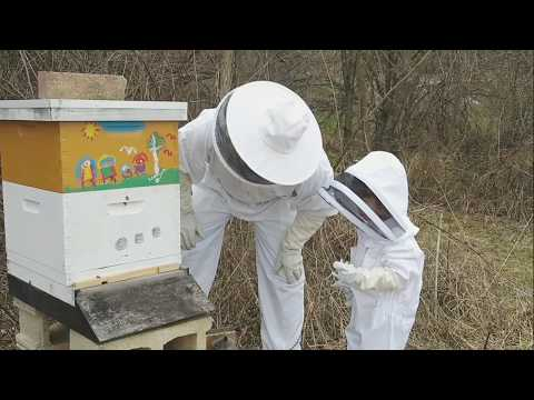 , title : 'Checking Our Russian Bee Hive