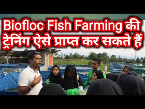 Biofloc Fish Farming Live - Fish Farming - Video - Free Music Videos