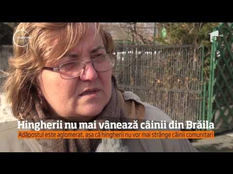 Hingherii nu mai vânează câinii din Brăila