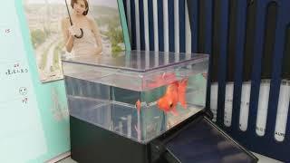 光能金魚4
