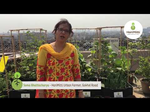Testimonial from Soma Bhattacharya on Urban Farming with HariMitti