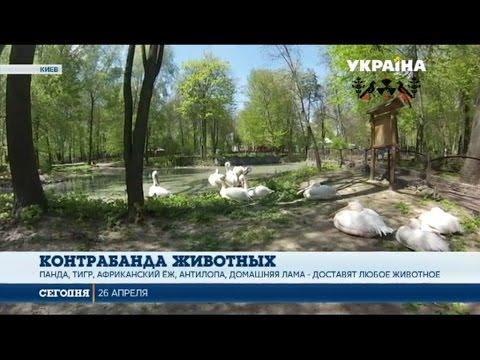 В Украине процветает бизнес на редких животных