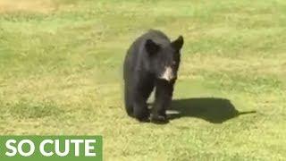 Wild Bear Cub Gives Golfer A Loving Hug