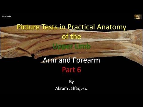 Test obrazkowy - anatomia ramienia i przedramienia część 6