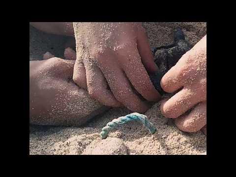 Schutz der Loggerhead Schildkröten
