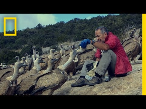 The Vultures This Man Loves May Soon Disappear | National Geographic thumbnail