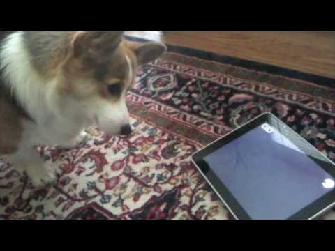 Internet's Age-Old Riddle Answered: Cats Are Better Than Dogs. At Least With iPads.