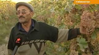 Виноград, гранаты и хурма - гордость Узбекистана