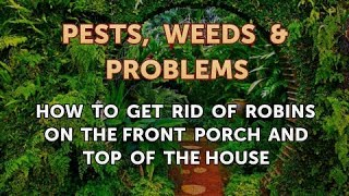 How to Get Rid of Robins on the Front Porch and Top of the House