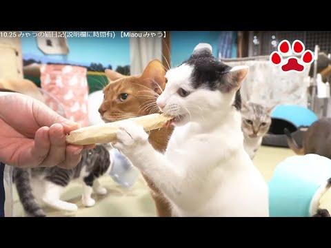 youtube-動物記事2020/09/05 13:00:02