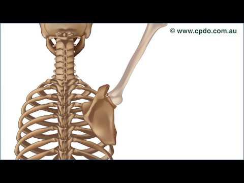 Ist Rückenschmerzen Verstopfung