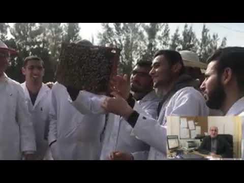 مساق تربية النحل في كلية الزراعة والطب البيطري