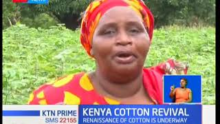 Renaissance of cotton underway in the country