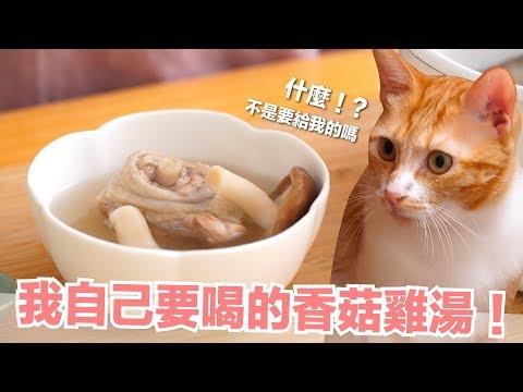 貓咪也可以喝香菇雞湯