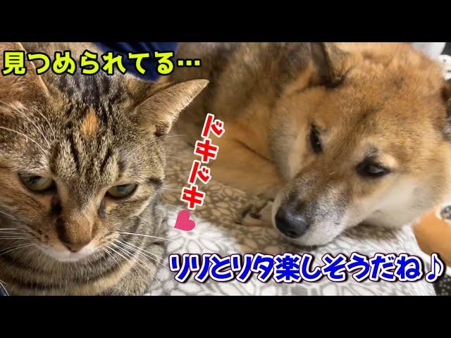 玩具が消えて子猫が呆然!取ってあげる優しい猫 The cat gives a toy for the kitten
