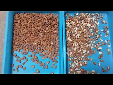 Genn Make X Series Almond Sorting Machine