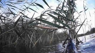 Район Темиртау  -Токаревка Подводная охота на щуку  Лето 2015