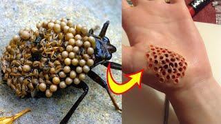 10 Delikado at nakamamatay na insekto