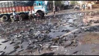 Fish rain-india
