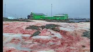 Wygląda jak krew. Niesamowite zjawisko na Antarktydzie